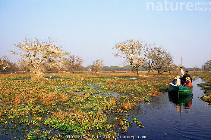 Bird viewing from boat, Keoladeo Ghana NP, Bharatpur, Rajasthan, India, ASIA,BIRDS,birdwatching,BOATS,ecotourism,INDIAN SUBCONTINENT,LEISURE,PEOPLE,RESERVE,SUMMER,TOURISM,tourists,WETLANDS,INDIAN-SUBCONTINENT,INDIA,,UNESCO World Heritage Site,, Pete Oxford