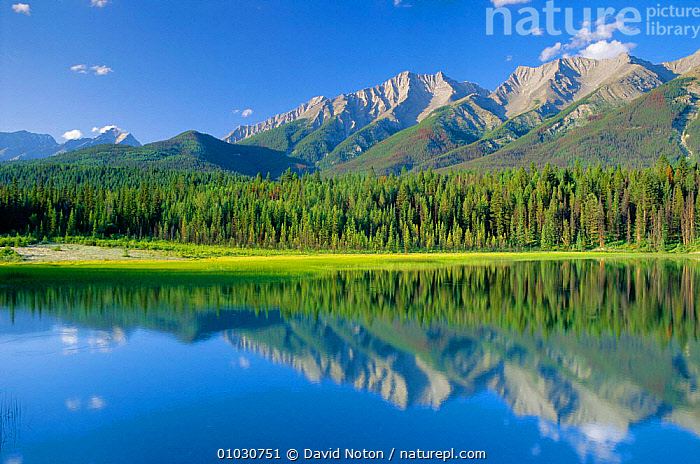 Dog Lake in Kootenay NP, British Columbia, Canada., CONCEPTS,LAKES,MOUNTAINS,NATIONAL PARK,NORTH AMERICA,NP,OUTSTANDING,PEACEFUL,PLANTS,REFLECTIONS,TREES,,Canadian Rocky Mountain Parks World Heritage Site, UNESCO World Heritage Site,Rocky Mountains,Rockies,, David Noton