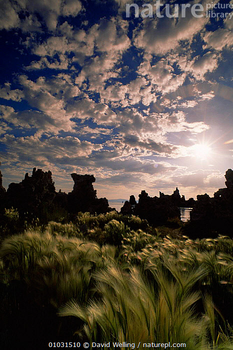 Sun about to set over Tufa towers and summer wavy grass on edge of Mona Lake NP, California, USA, CLOUDS,GRASSES,LAKES,LANDSCAPES,NORTH AMERICA,RESERVE,ROCK FORMATIONS,SUMMER,SUNRISE,SUNSET,USA,VERTICAL,Weather,Geology, David Welling