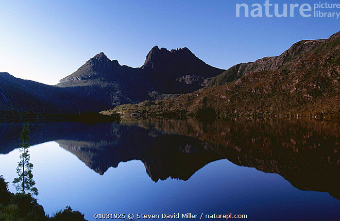 Cradle Mountain reflected in Lake Dove in evening light, Cradle Mountain Lake St Clair NP, Tasmania, Australia, AUSTRALASIA,AUSTRALIA,DUSK,EVENING,HIGHLANDS,LAKES,LANDSCAPES,MOUNTAINS,NP,REFLECTIONS,RESERVE,WATER,National Park, Steven David Miller