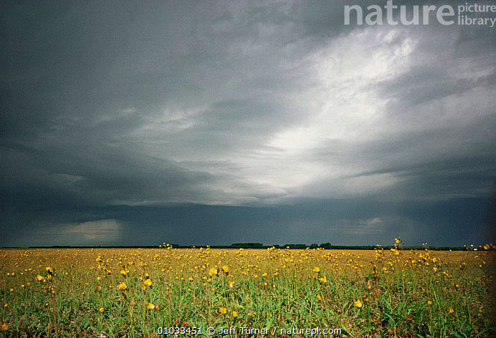 Storm brewing over Peace-Athabasca river Delta, Wood Buffalo NP, Alberta, Canada  ,  CANADA,CLOUDS,Delta,FRESHWATER,inland,LANDSCAPES,MARSHES,NORTH AMERICA,NP,SKY,STORMS,WETLANDS,wildflowers,Weather,National Park  ,  Jeff Turner