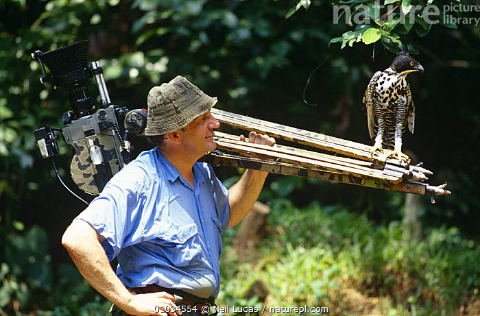 Camerman Mike Richards with Blythe's Hawk Eagle {Nisaetus alboniger}, on location for BBC programme 'Wildlife on One Special' 'Eagle', Malaysia, 1997  ,  BIRDS, BIRDS-OF-PREY, camera, cameraman, EAGLES, film, FILMING, MIXED-SPECIES, NHU, PEOPLE, SOUTH-EAST-ASIA, tripod, VERTEBRATES,Asia,Raptor  ,  Neil Lucas