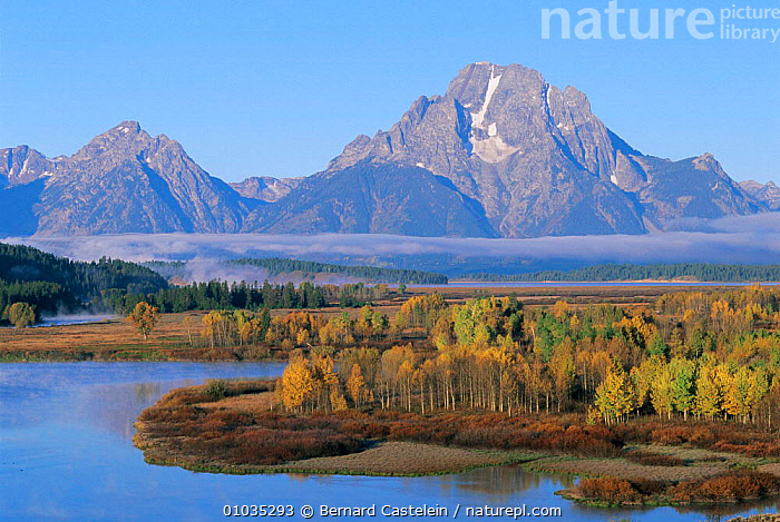 Oxbow bend in Snake River. Mount Moran and Aspen trees. Grand Teton NP, USA  ,  AUTUMN,PLANTS,LANDSCAPES,RIVER,RIVERS,TREES,MOUNTAINS,North America,USA ,Rocky Mountains,  ,  Bernard Castelein