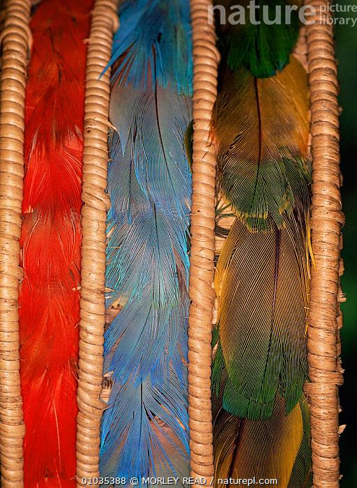 Detail of Achuar headress made of macaw & parrot feathers,  Ecuador Amazon  ,  BIRDS,CLOSE UPS,CULTURES,FEATHERS,MACAWS,PARROTS,SOUTH AMERICA,TRADITIONAL,TRIBES,VERTEBRATES  ,  MORLEY READ