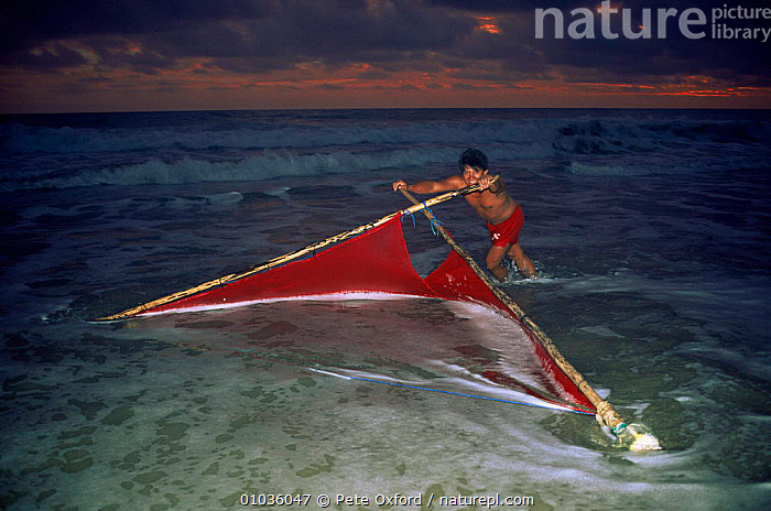 Man with red net fishing in shallow surf for larval penaeid shrimp, Western Ecuador.  ,  BEACHES,COASTS,CULTURES,FISHERIES,FISHING,HARVESTING,MAN,PEOPLE,RED,SOUTH AMERICA,TRADITIONAL,TRIBES,SOUTH-AMERICA  ,  Pete Oxford