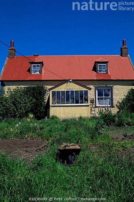 Typical house and garden at Port Stanley, East Falkland Island, Falklands  ,  BUILDINGS,COASTS,FALKLAND ISLANDS,HOMES,houses,south atlantic islands,SOUTH AMERICA,TRADITIONAL,VERTICAL,SOUTH-AMERICA  ,  Pete Oxford