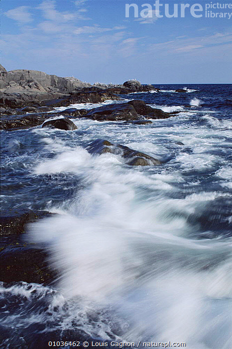 Waves breaking along shore St Lawrence Gulf, Canada, CANADA,COASTS,LAWRENCE,LG,NORTH AMERICA,OCEANS,ST,THE SEA,VERTICAL,WAVES, Louis Gagnon