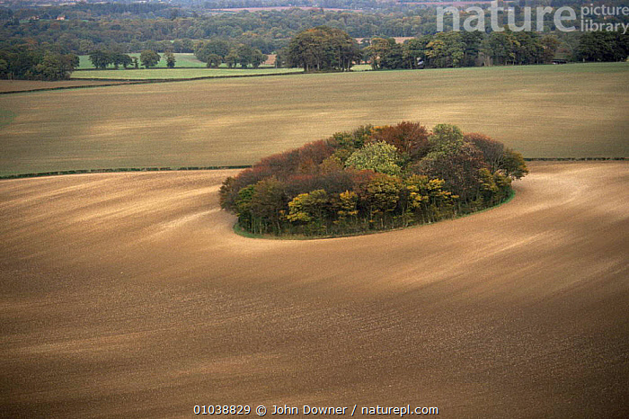 Aerial view of woodland coppice surrounded by arable fields, Wiltshire, UK  ,  AGRICULTURE,ENGLAND,EUROPE,LANDSCAPES,UK,WOODLANDS,United Kingdom,British  ,  John Downer