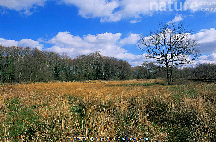 Upgate Common, Norfolk, UK.  ,  ENGLAND,EUROPE,LANDSCAPES,MARSHES,UK,WETLANDS,United Kingdom,British  ,  Nigel Bean