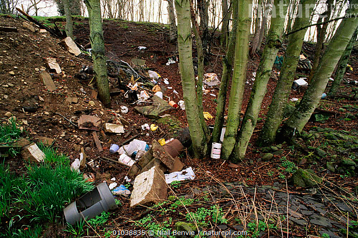 Refuse dumped in woodland. Angus, Scotland, UK.  ,  DUMPED,WOODLAND,REFUSE,UK,ANGUS,HORIZONTAL,POLLUTION,LITTER,NB,WOODLANDS,EUROPE,UNITED KINGDOM,BRITISH  ,  Niall Benvie