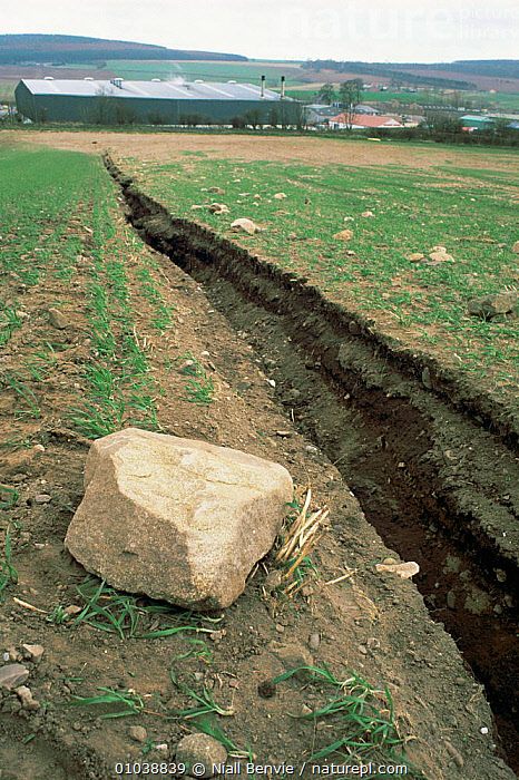 Soil erosion in field of winter wheat. Fife, Scotland, Gully formation  ,  AGRICULTURE,EROSION,EUROPE,FARMLAND,SCOTLAND,SOIL,UK,WINTER,United Kingdom,British  ,  Niall Benvie