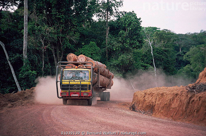 Lorry carrying timber out of rainforest, active deforestation in Gabon, also the road makes forest accesible for hunting  ,  AFRICA,DEFORESTATION,DESTRUCTION,ENVIRONMENTAL,FORESTRY,HUNTING,HUNTING FOOD,INDUSTRY,LOGGING,ROADS,TREES,TROPICAL,CENTRAL AFRICA RAINFOREST,VEHICLES,WEST AFRICA,Plants,WEST-AFRICA  ,  Bernard Walton