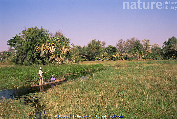 Guide punting a Tourist in Makoro (dug-out canoe) Okavango delta, Botswana.  ,  AFRICA,BOATS,LANDSCAPES,MARSHES,RIVERS,SOUTHERN AFRICA,SWAMPS,TOURISM,WETLANDS  ,  Pete Oxford