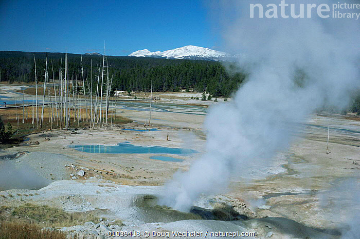 Active geysers releasing steam in Norris Geyser Basin, Yellowstone NP, Wyoming, USA  ,  GEOTHERMAL,geysers,hot,LANDSCAPES,MINERALS,NORTH AMERICA,NP,pools,steam,USA,Geology,National Park  ,  Doug Wechsler
