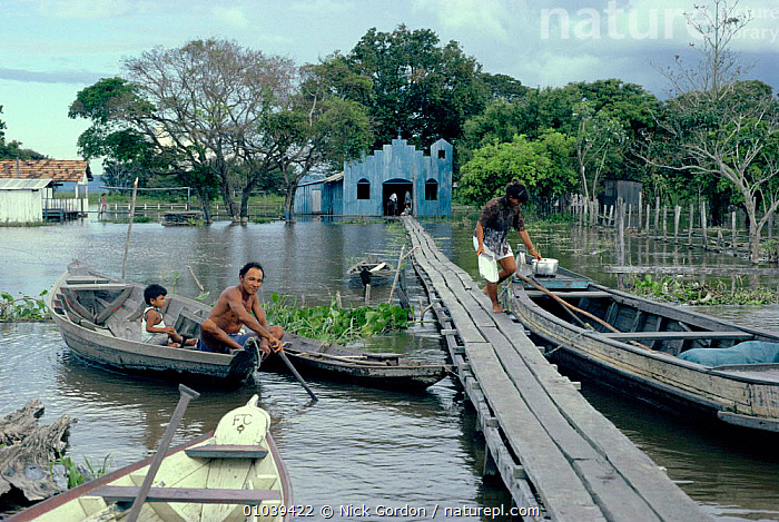 Community near Santarem in Varzea, Amazon River flood plain, with walkway over water to houses and church.  ,  AMAZONIA,BOATS,CHURCH,FLOODED,FLOODS,FRESHWATER,HOUSES,NG,NR,PEOPLE,PLAIN,SEASONAL,TRIBES,VILLAGES,WALKWAY,WET SEASON,SOUTH-AMERICA  ,  Nick Gordon