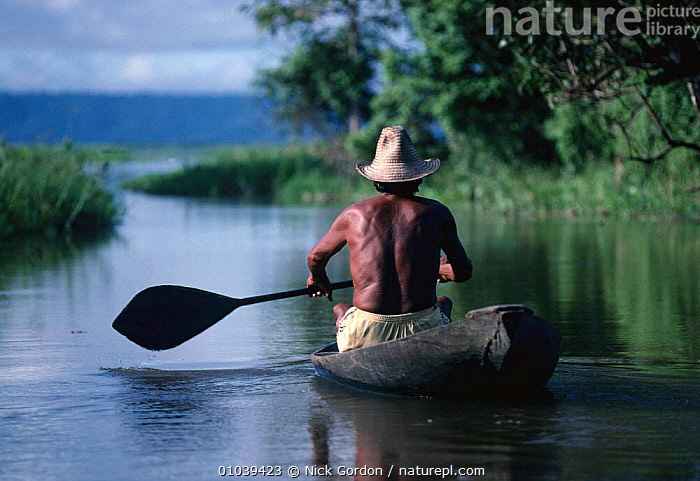 Varzea - flood plain of Amazon River with fisherman in canoe. Brazil, South America  ,  FLOODED,LANDSCAPES,PEOPLE,TRADITIONAL,MAN,CANOE,FOREST,FRESHWATER,RIVERS,WET SEASON,SOUTH-AMERICA  ,  Nick Gordon