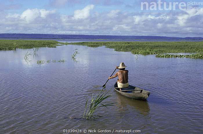 Fisherman in traditional canoe travelling through Varzea, a flood plain of Amazon River, Brazil, South America  ,  BOATS,CANOES,CULTURES,FISHING,FRESHWATER,LAKES,LANDSCAPES,PEOPLE,RIVERS,SOUTH AMERICA,TRADITIONAL,TRANSPORT,WETLANDS,WET SEASON,SOUTH-AMERICA,OPEN-BOATS, BOATS, BOATS  ,  Nick Gordon
