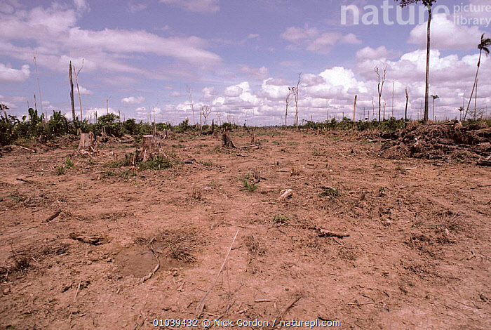 Previous site of primary rainforest cleared for cattle ranching, probably by slash and burn, Rondonia State, Amazonia Brazil  ,  AMAZON,BURN,CATTLE,CONSERVATION,DEFORESTATION,DESTRUCTION,EROSION,FARMING,RAIN,SLASH,SOUTH AMERICA,TROPICAL RAINFOREST,Weather,SOUTH-AMERICA  ,  Nick Gordon