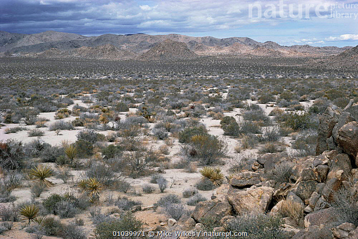 View across Joshua Tree NM, California, USA  ,  DESERTS,dry,LANDSCAPES,NORTH AMERICA,RESERVE,ROCKS,scrubland,USA  ,  Mike Wilkes