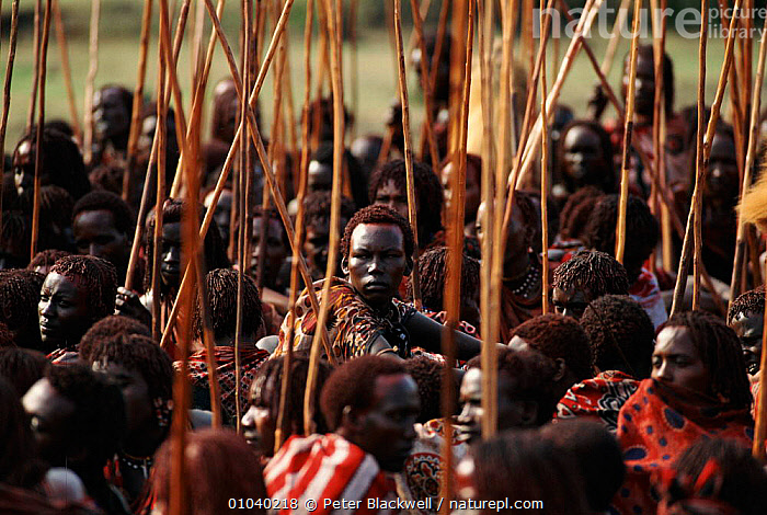 Masai warriors during Eunoto ceremony carry cermonial sticks. Kenya, Mara region.  ,  AFRICA,ATMOSPHERIC,CEREMONY,CULTURES,EAST AFRICA,EUNOTO,GROUPS,MALES,MARA,MASAI,PBL,PEOPLE,TRADITIONAL,TRIBES,EAST-AFRICA  ,  Peter Blackwell