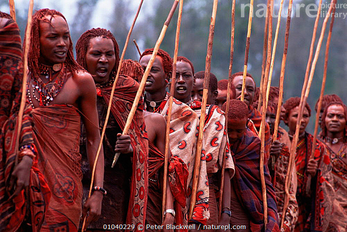 Maasai warriors dance with poles during traditional Eunoto ceremony, Mara region, Kenya  ,  AFRICA,DANCING,EAST AFRICA,GROUPS,MEN,PEOPLE,TRADITIONAL,TRIBES,EAST-AFRICA  ,  Peter Blackwell
