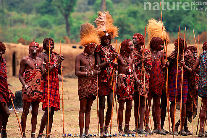 Masai warriors in traditional dress for Eunoto ceremony, Kenya Kenya, Mara region. Right of passage, initiation  ,  AFRICA,ATMOSPHERIC,CEREMONY,COLOURFUL,CONCEPTS,CULTURES,DRESS,EAST AFRICA,EUNOTO,FEATHERS,GROUPS,HEADDRESS,HOLIDAYS,HORIZONTAL,INITIATION,INTERESTING,MANHOOD,MARA,MASAI,PASSAGE,PBL,PEOPLE,REGION,RIGHT,TRADITIONAL,TRIBES,WARRIOR,WARRIORS,EAST-AFRICA  ,  Peter Blackwell