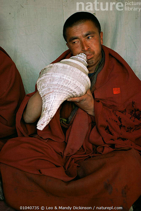 Buddhist monk blows a horn made from large shell, Nepal  ,  ASIA,INDIAN SUBCONTINENT,instrument,MAN,music,PEOPLE,shells,TRADITIONAL,VERTICAL  ,  Leo & Mandy Dickinson