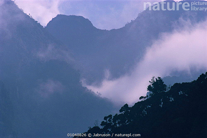 "Morning view of Ruwenzori foothills, Mahungu 3310m, ""Mountains of the Moon"", Virunga NP, Democratic Republic of Congo  ,  AFRICA,ATMOSPHERIC,CENTRAL AFRICA,CLOUDS,DAWN,HIGHLANDS,LANDSCAPES,MIST,MOUNTAINS,Weather , Bruce Davidson  ,  Jabruson"
