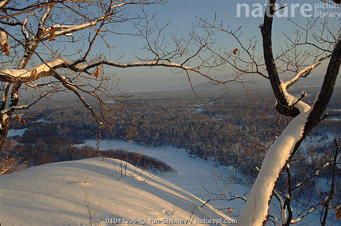 Ussuri forest in winter. Ussuriland, Primorsk, Russia  ,  USSURI,RIVERS,HORIZONTAL,SNOW,WINTER,WOODLANDS,FOREST,,USSURILAND,SIBERIA,CIS  ,  Yuri Shibnev