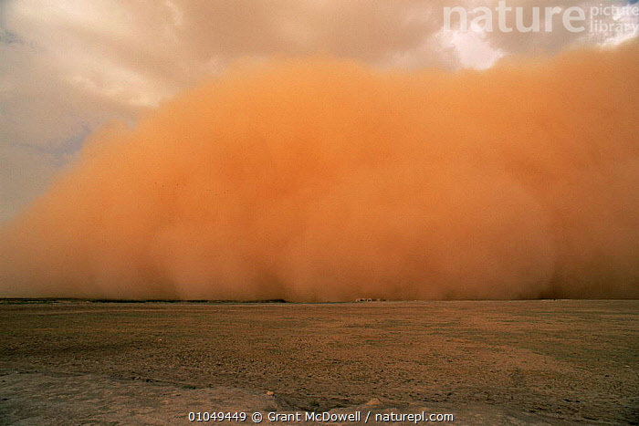 Dust storm preceeding thunderstorm in the Sahel, Mali, West Africa  ,  AFRICA,CLOUDS,DESERTS,DRAMATIC,DUST,DUSTSTORMS,LANDSCAPES,NATURAL PHENOMENA,SAND,SANDSTORMS,SKY,STORMS,WEATHER,WEST AFRICA,NORTH-AFRICA  ,  Grant McDowell