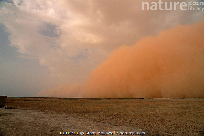 Dust storm preceeding thunderstorm in the Sahel, Mali, West Africa  ,  AFRICA,DESERTS,DRAMATIC,DUST,DUSTSTORMS,NATURAL PHENOMENA,SAND,SANDSTORMS,SKY,STORMS,WEATHER,WEST AFRICA,NORTH-AFRICA,CONCEPTS  ,  Grant McDowell