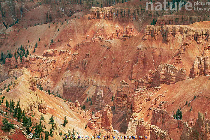 Looking down onto sandstone hoodoos at Point Supreme, Cedar Breaks National Monument, Utah, USA  ,  DESERTS,EROSION,hoodoos,LANDSCAPES,MOUNTAINS,NORTH AMERICA,RESERVE,ROCK FORMATIONS,sandstone,USA,Geology  ,  David Welling