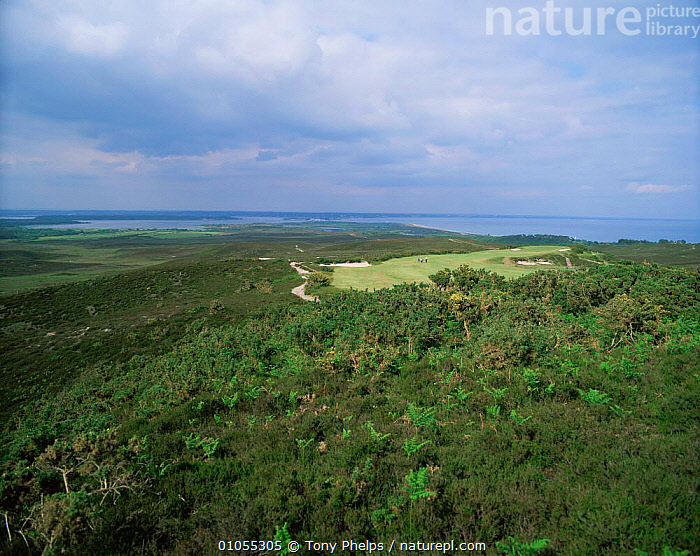 Studland NNR Purbeck, Dorset, UK.  ,  ENGLAND,EUROPE,HEATHLAND,HORIZONTAL,LANDSCAPES,RESERVE,UK,United Kingdom,British  ,  Tony Phelps