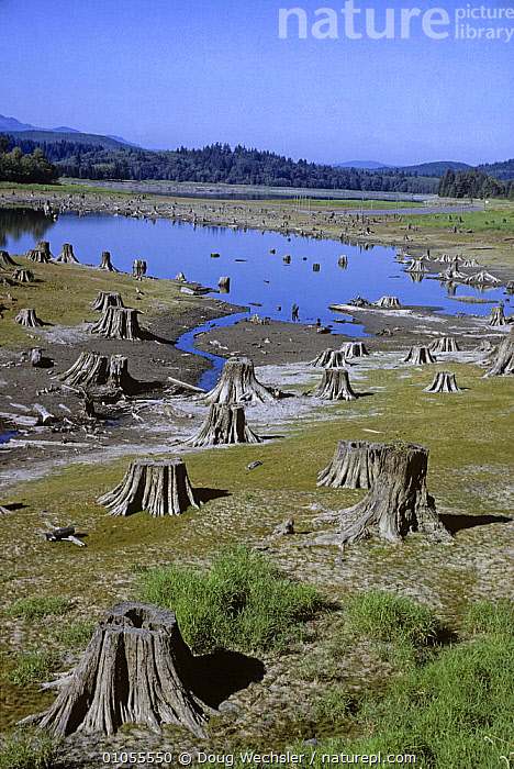 Cascade foothills Washington, USA, reservoir in dry period. Deforestation- forest was clearcut to make way for the reservoir. 1989.  ,  DEFORESTATION,LANDSCAPES,NORTH AMERICA,TREES,USA,VERTICAL,Plants  ,  Doug Wechsler
