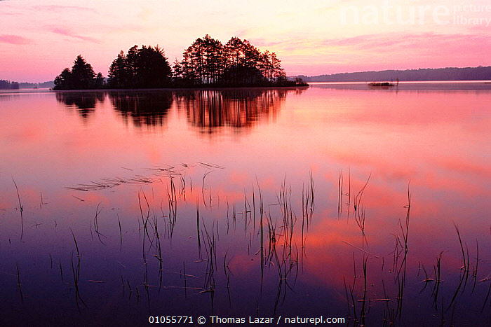 Sunrise over water at Turtle Flambeau flowage, Wisconsin, USA  ,  CLOUDS,HORIZONTAL,LAKES,LANDSCAPES,LAZAR,NORTH AMERICA,PINK,REFLECTIONS,SUNRISE,TL,WATER,WEATHER,USA  ,  Thomas Lazar