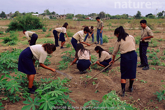 Student agriculture project, Pro Pueblo Foundation, Ecuador  ,  AGRICULTURE,CROPS,CULTURES,EDUCATION,FARMLAND,HARVESTING,HORIZONTAL,OXFORD,PLANTS,PO,SOUTH AMERICA,STUDENT,TRADITIONAL,VILLAGES  ,  Pete Oxford
