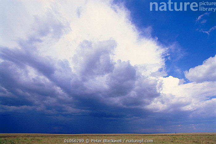 Rain clouds gathering over the savanna, Kenya, East Africa.  ,  AFRICA,ATMOSPHERIC,BIG,CLOUDS,SAVANNA,KENYA,RAIN,HORIZON,BLACKWELL,EAST AFRICA,HORIZONTAL,LANDSCAPES,PBL,CLOUD,GRASSLAND,WEATHER  ,  Peter Blackwell