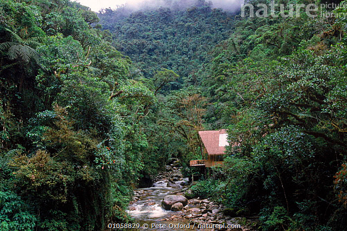 Manu cloud forest lodge and stream at 1500m, Peru, South America, 1500M,BUILDINGS,CLOUD FOREST,HORIZONTAL,MANU,RIVERS,SOUTH AMERICA,SOUTH-AMERICA, Pete Oxford