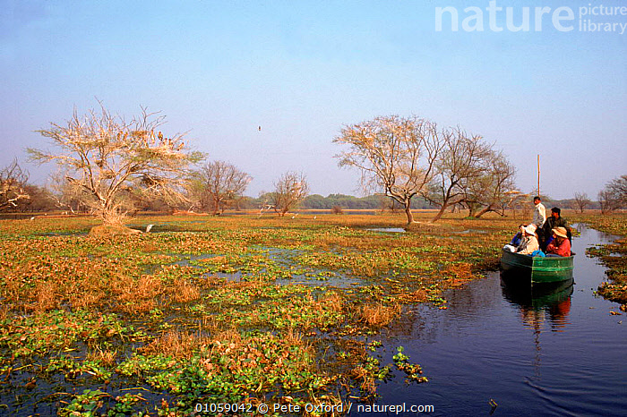 Tourists birdwatching from boat. Bharatpur, Rajasthan, India, LANDSPAPES,BIRDWATCHING,BHARATPUR,PEOPLE,RAJASTHAN,TOURISM,BOATS,INDIAN SUBCONTINENT,BIRDS,RESERVE,HORIZONTAL,ASIA,INDIAN-SUBCONTINENT,INDIA,,UNESCO World Heritage Site,, Pete Oxford