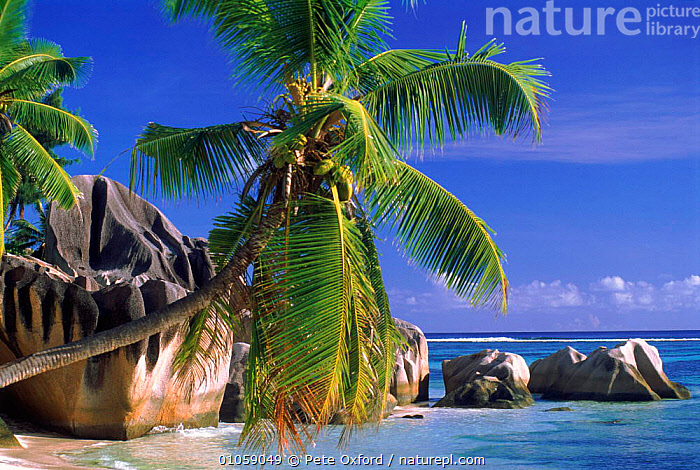 Coconut palm trees and granite outcrop, Sourse d'Argent beach, Las Digue, Seychelles, Indian Ocean, ASIA,BEACHES,coastal waters,COASTS,HOLIDAYS,Indian Ocean,LANDSCAPES,MARINE,PALMS,PLANTS,ROCKS,sea,TREES,TROPICAL,Concepts,INDIAN OCEAN ISLANDS, Pete Oxford