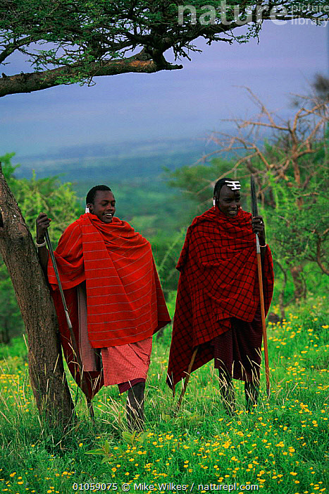 Masai warriors Serengeti NP, Tanzania, PEOPLE,MEN,MIKE,TRIBES,MASAI,WARRIORS,MW,TRADITIONAL,VERTICAL,WILKES,SERENGETI,RED,AFRICA,RESERVE,COLOURFUL,MALES,EAST-AFRICA, Mike Wilkes