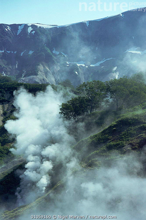 Geysers in Geyser valley, Kamchatka, Russia, ASIA,GEOTHERMAL,LANDSCAPES,RUSSIA,steam,valley,VERTICAL,volcanic,Geology,CIS, NIGEL MARVEN