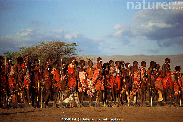 Maasai boys during Alamal lengipaata ceremony, Rift Valley, Kenya., AFRICA,CHILDREN,CULTURES,EAST AFRICA,GROUPS,HORIZONTAL,MALES,PEOPLE,TRADITIONAL,TREES,TRIBES,Plants,EAST-AFRICA , Bruce Davidson, Jabruson