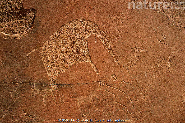 Rock drawing of elephant, Twyfelfontein, Namibia, AFRICA,ancient,ANIMALS IN ART,MAMMALS,SOUTHERN AFRICA, Jose B. Ruiz