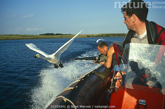 "Simon King filming imprinted Whooper swans in flight for tv programme ""Addicted to Swans"", UK, BIRDS,BOATS,EUROPE,FILMING,FLYING,HORIZONTAL,NHU,PEOPLE,SWANS,UK,WATERFOWL,United Kingdom,British, NIGEL MARVEN"