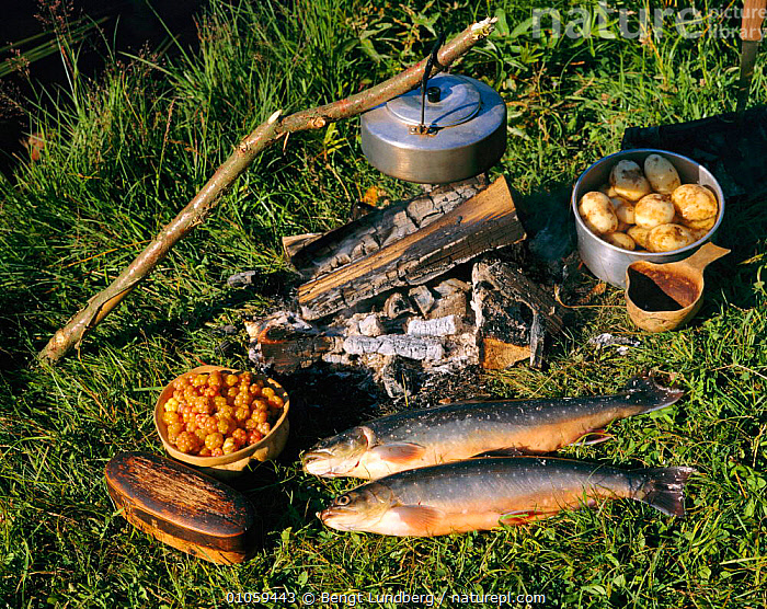 Freshly caught fish prepared for cooking, Sweden, MEAL,FRUIT,FIRE,BERRIES,FOOD,TROUT,POTATOES,FISHING,FOODS,HORIZONTAL,LANDSCAPES,KETTLE,Plants,Europe, Scandinavia, Scandinavia, Scandinavia, Bengt Lundberg
