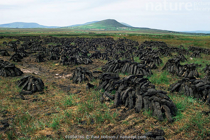Peat cuts stacked to dry, Ireland, BOGS,EIRE,ENDANGERED,EUROPE,FUEL,IRELAND,LANDSCAPES,MOORLAND,TRADITIONAL,Wetlands, Paul Hobson