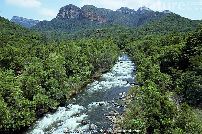 Blyde River running through forest, North Province, South Africa, AFRICA,HORIZONTAL,LANDSCAPES,RIVERS,ROCK FORMATIONS,SOUTHERN AFRICA,TROPICAL DRY FOREST,Geology, Tony Phelps