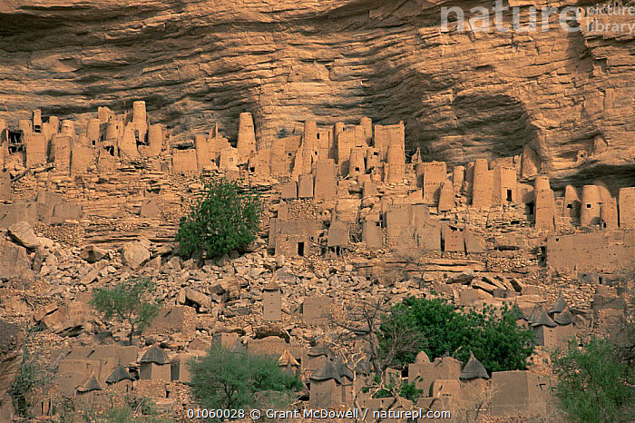 Dogon escarpment in rockface, Mali, North Africa, AFRICA,BUILDINGS,CLIFFS,CULTURES,HOMES,LANDSCAPES,NORTH AFRICA,ROCK FORMATIONS,SETTLEMENTS,TRADITIONAL,TRIBAL,TRIBES,VILLAGES,WEST AFRICA,Geology,NORTH-AFRICA, Grant McDowell