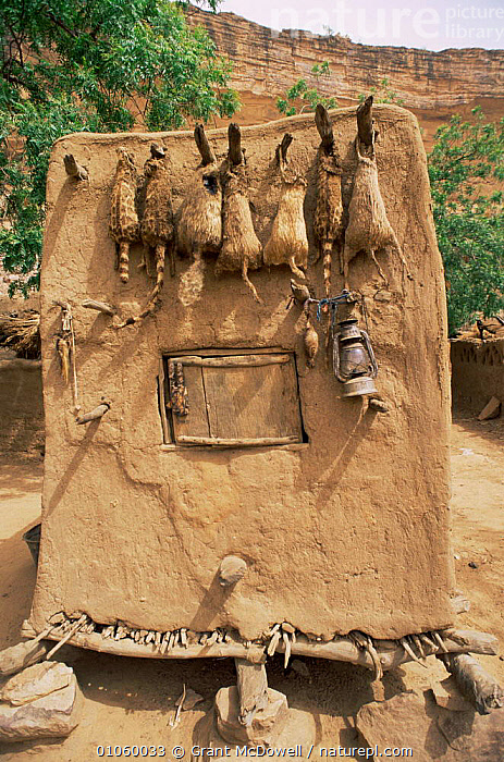 Dogon wildcat fetishes on grain store, Mali, North Africa, AFRICA,AGRICULTURE,BUILDINGS,CULTURES,HUNTING SPORT,MAMMALS,NORTH AFRICA,PEOPLE,SKINS,TRADITIONAL,TRIBAL,TRIBES,VERTICAL,WEST AFRICA,NORTH-AFRICA, Grant McDowell